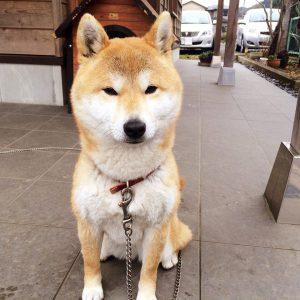 看板犬170302