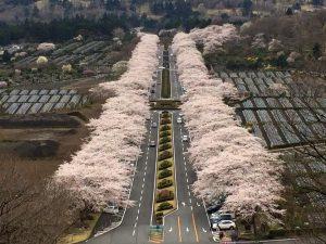 富士霊園170417