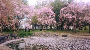 桜170425