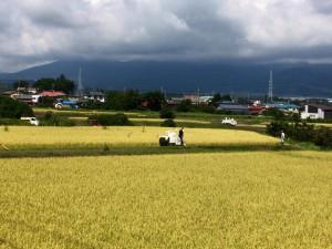 稲刈り170913