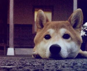 看板犬171101-01