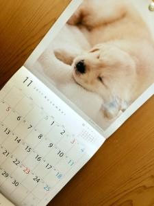 カレンダー171101