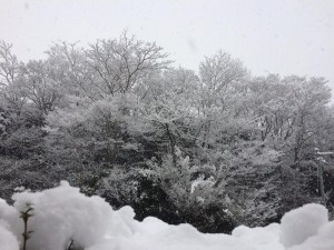 雪180123