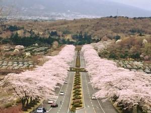 富士霊園180405-01
