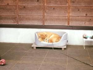 看板犬180424-01