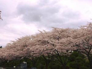 冨士霊園180405-02
