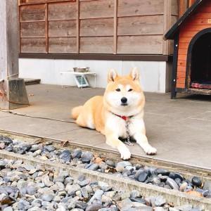 看板犬181005-01